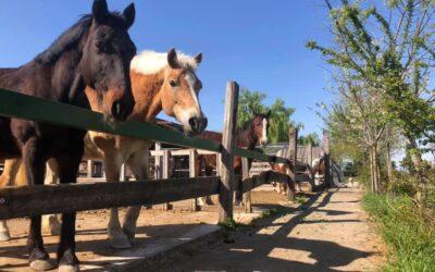 Riprendono le attività in fattoria dedicate al cavallo